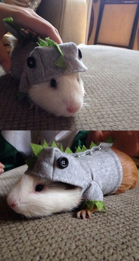 Super Cute Little Dinosaur Hand Made Guinea Pigs Clothes