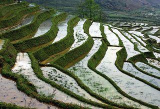 more rice terraces ... Sapa, Vietnam | par Zé Eduardo...
