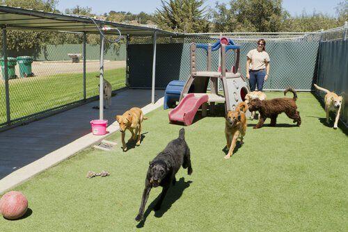 Juegos De Inteligencia Para Perros Mis Animales Jaulas Para Perros Perreras Al Aire Libre Jaula Para Perros