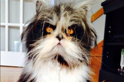 Meet Atchoum the Cat  This is Atchoum. He lives in Quebec with his pet parent Nathalie