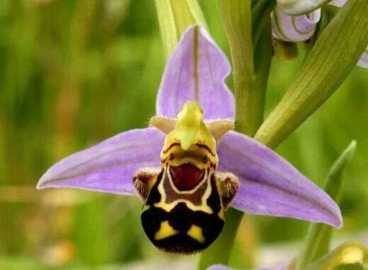 World's happiest flower. ♥♡♥