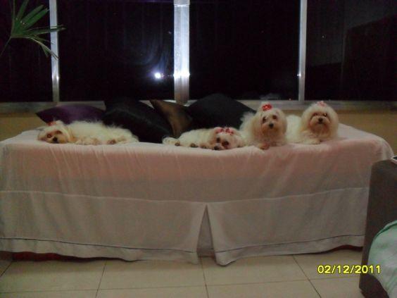A turma do canil brazilian lovely dogs