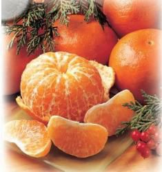 Tangerines - Florida produces the best Tangerines in the world.  With their unique zipper skin for easy peeling and incredible sweet taste that only Florida can produce, this is the finest citrus by far.  Because of their thin skins, Tangerines are hand selectred and packed in special foam trays for perfect arrival. Weight is approximate. Tree ripened and hand selected at the peak of their flavor. SEASON: NOVEMBER THRU APRIL.