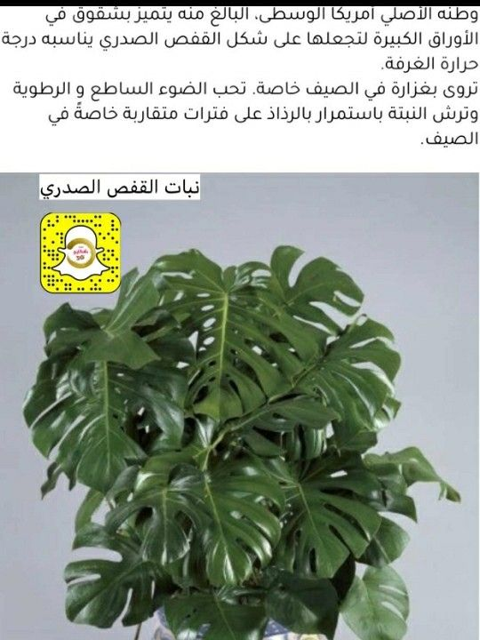 Pin By مسك الخروصي On نباتات وأشجار Veg Garden Flower Care House Plants