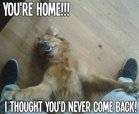 Aww what a great welcome home funny animals for Back home pictures