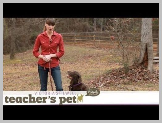 Heeling Fronts Dog Training Lesson With Connie Cleveland Dog