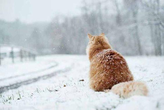 kışın yol gözleyen kedi
