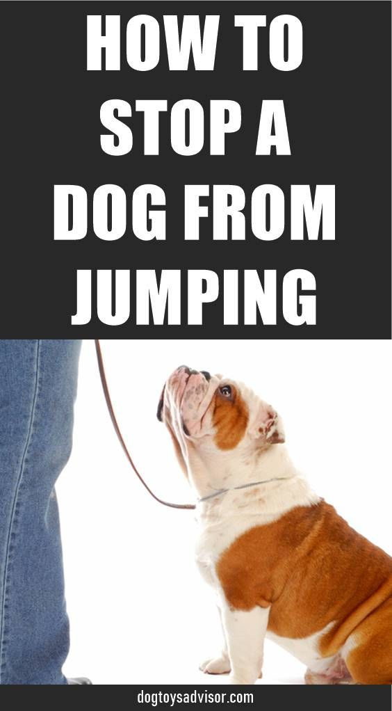 Dog Jumping On People Is One Of The Most Common Complaints Pet