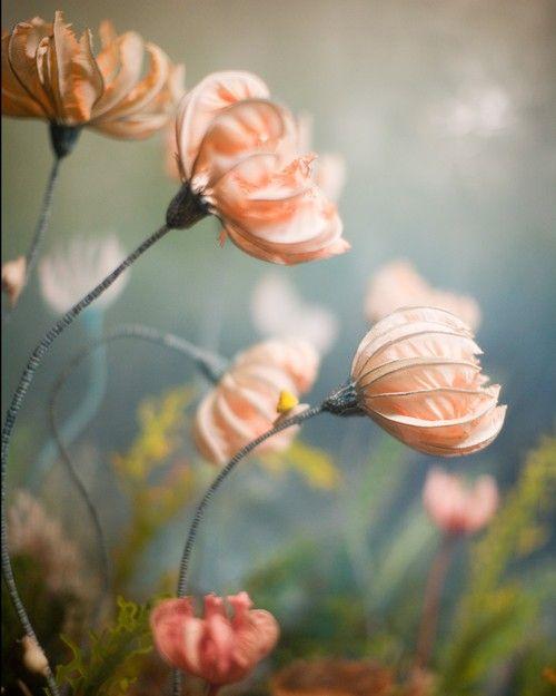 Beautiful pink sea lilies.