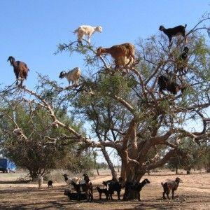 animaux, du Maroc, de lieux à visiter