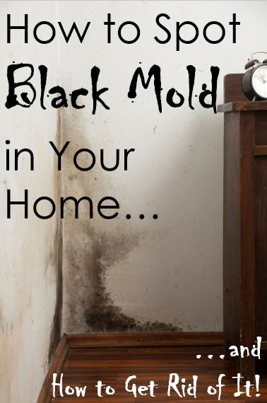 how to detect black mold in homes