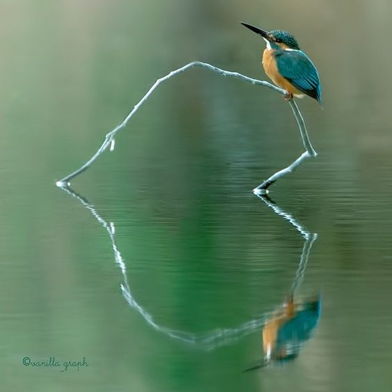 Most Amazing Photos Ever: The Most Amazing Nature Photography I Think I Have Ever