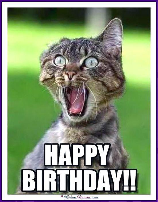 One Cool Cat Birthday Card Greetings Island