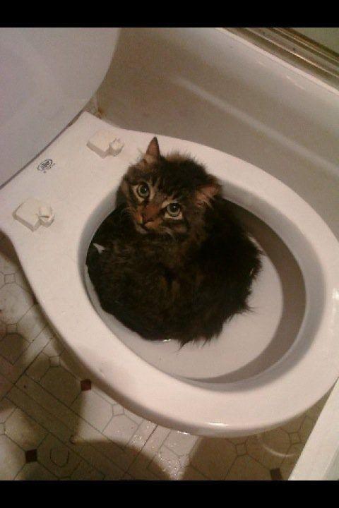 Weil die Toilette war kein Zweifel, Überschwemmungen - und das tapfere Seele opferte sein eigenes Wohlergehen im Interesse und zum Wohle aller. Die Welt braucht mehr Katzen wie diese.