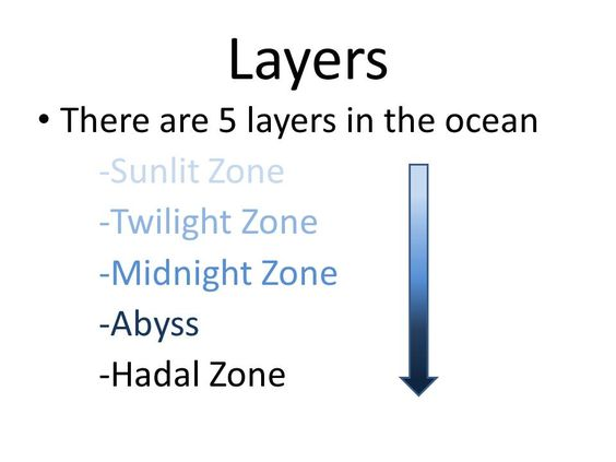 Ocean - layers and ocean life: PowerPoint, worksheets, art, books ...
