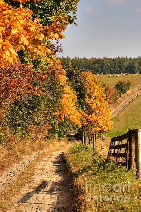 ☀Country Road And Autumn Landscape by Michal Boubin