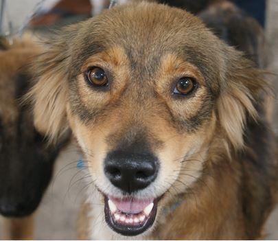 GPA realiza, neste domingo, evento de adoção de animais em parceria com o Caruaru Shopping http://goo.gl/gmge9o