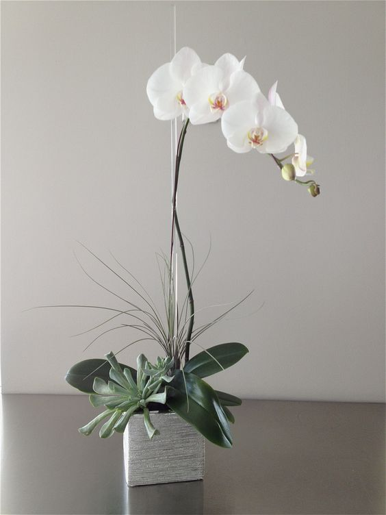 The Silver Orchid - a classic white orchid plant with tropical and ...