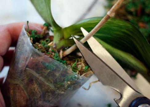 Rifiorire le orchidee: ecco il segreto super efficace per una fioritura perfetta nel 2020 | Orchidea, Cura orchidea, Orchidee da giardino