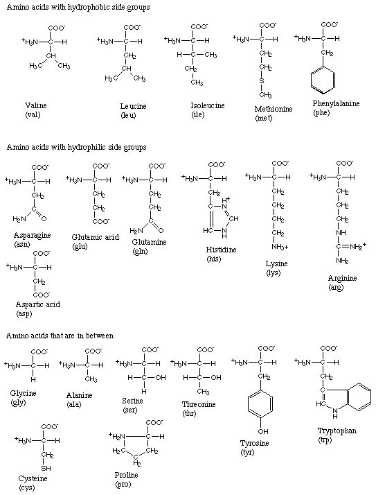 Amino Acid Structures  Projects To Try