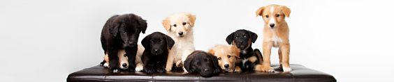 focusonrescue.com teaches amateur photographers how to glam up shelter dogs for pet adoption photos! | focus on rescue