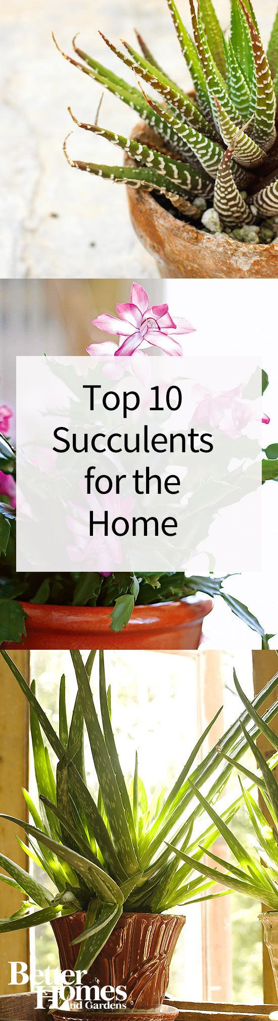 Succulents succulent care and plants on pinterest for Easy to take care of outdoor plants