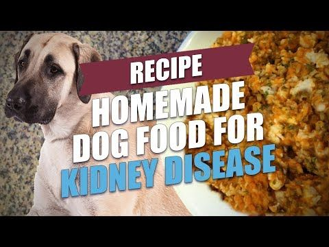 Homemade Dog Food For Kidney Disease Recipe Video Quick Simple Kidney Disease Recipes Kidney Recipes Kidney Failure Recipes