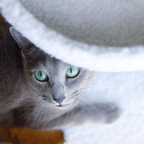 ■猫はいいぞ。 : ネコじかけのBlog