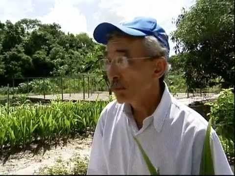 Uso do sal no plantio do coco deve ser feito apenas após a análise do solo