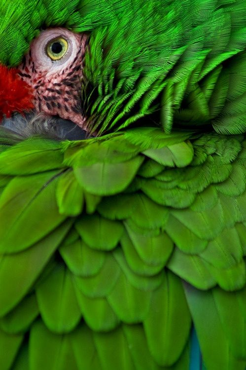 Beautiful Jungle Colors - Military Macaw!