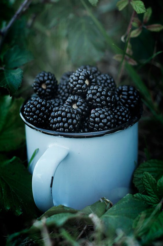 Blackberries in Neolithic Britain were surrounded by superstitions and In South west England they believed the first Blackberries in a season could get rid of warts.....their dark colour does make them high in antioxidants! If you suffer from PMS the phytoestrogens in blackberries are thought to relieve some symptoms. And in season they are delicious!: