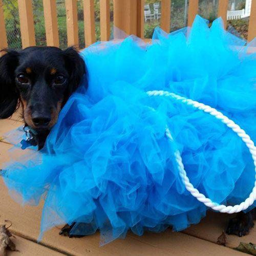 Epic Dog Halloween Costumes Ideas Diy Dog Costumes Dog