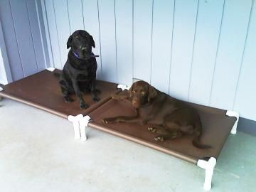 """Dog Bed, Outdoor Beds, Dog Cot, Orthopedic Bed, 12 CANVAS Colors. Medium To Large Dogs. 32""""x44""""x8"""" by DianesK9Creations for $114.95"""