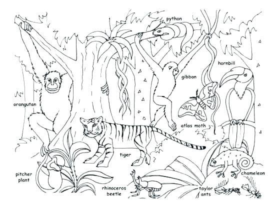 Safari Animal Coloring Pages Jungle Coloring Pages Free Printable Baby Jungle Animals Coloring Pages Baby Jun Malvorlagen Tiere Regenwald Tiere Tierlebensraume