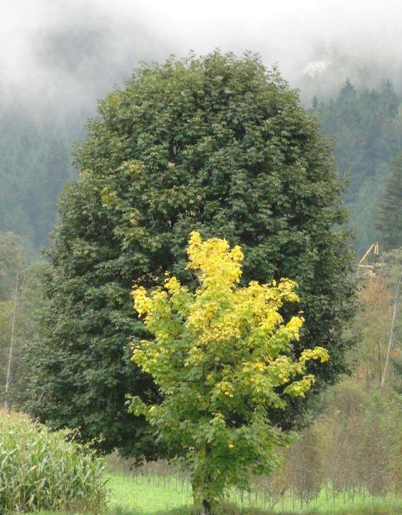 Bäume in Sand in Taufers - Ahrntal - Südtirol