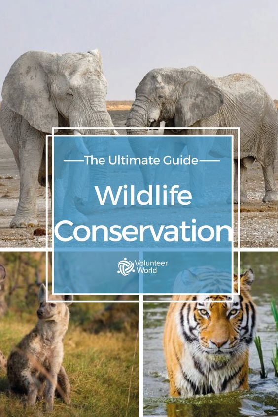 speech on conservation of wildlife Free essay: wildlife preservation may be an important contribution to our animal's lives, but what if these animal's lives would be getting in the way of our.