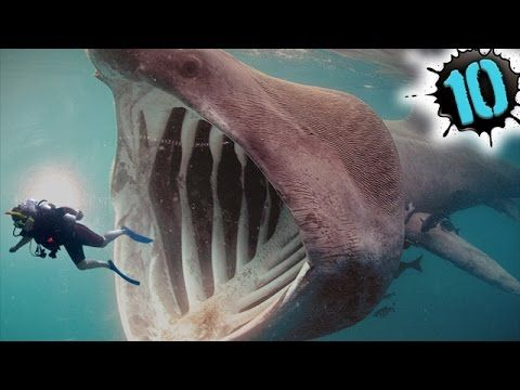 BIGGEST Animal EVER Recorded in the Ocean Depths ... World Largest Animal Ever Recorded