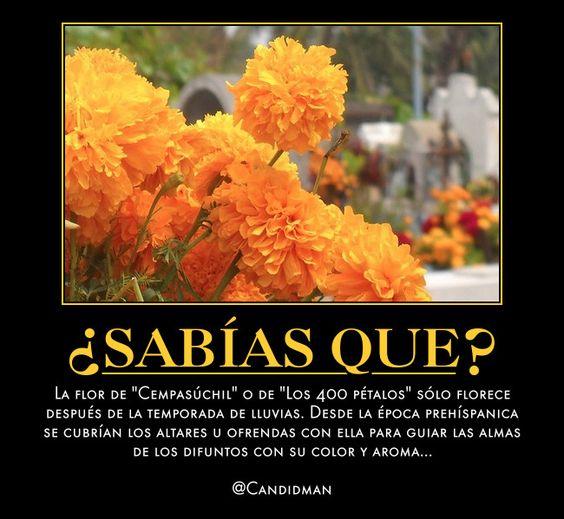 la palabra del d237a quotcempas250chilquot spanishdict answers