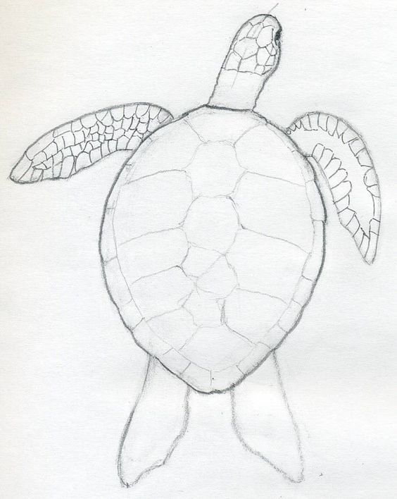 How To Draw Sea turtle | How To Draw A Turtle | Home Decor ...