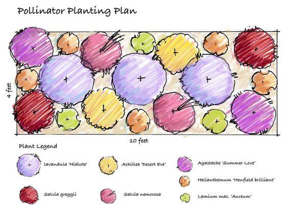 Pollinator Garden Gardening Pinterest Landscape