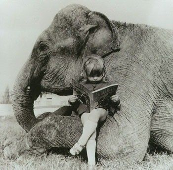 Elephant and reading girl