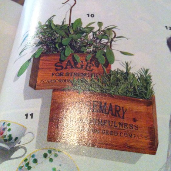 Herbs for low center pieces!