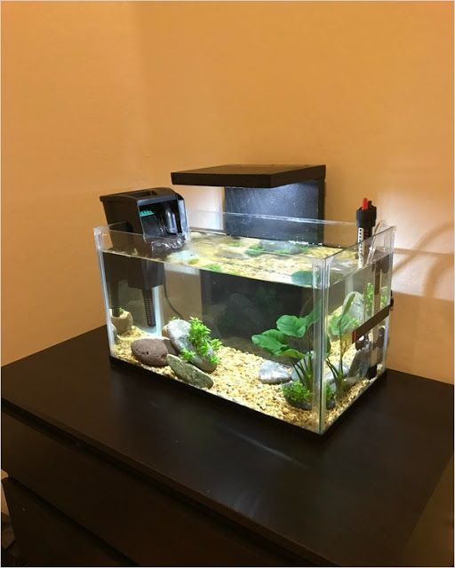 10 Gallon Fish Tank In 2020 10 Gallon Fish Tank Small Fish Tanks Fish Tank