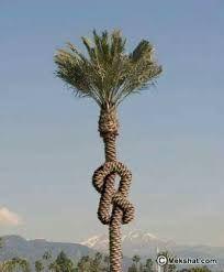 Bildergebnis für ungewöhnliche bäume