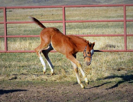 (30) 6666 Ranch - Timeline Photos