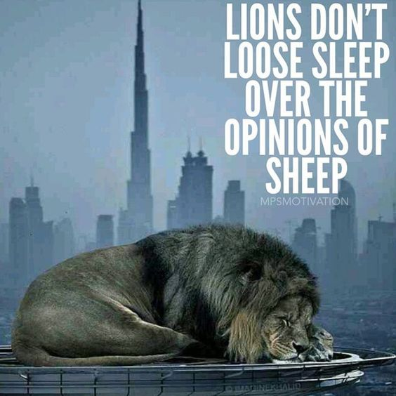 Lion Sheep Quote: Pinterest • The World's Catalog Of Ideas