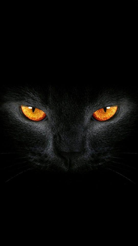 Mobile Background Hd 4k Black Cat Eyes Cute Cat Wallpaper Black Cat Art Black Cat Drawing