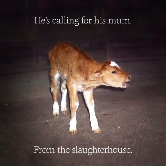 Ask me why I am vegan. I beg you to make the connection. The babies you eat and wear (yes, they are all killed within a year or two of their birthday) are no different to the animals you adore as pets.. vegankit.com. howdoigovegan.com