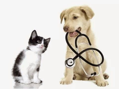 Pin By Florine Hyatt On Lynn S Board In 2020 Animal Hospital Dog Insurance Pet Insurance Cost