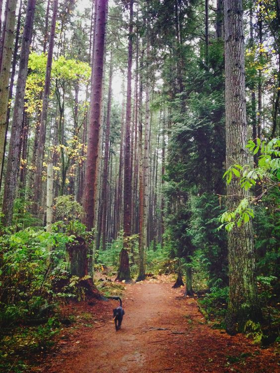 Dog-walking in Vancouver's Endowment Lands near the University of British…